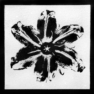 Rubem Robierb, Power Flower Black on White