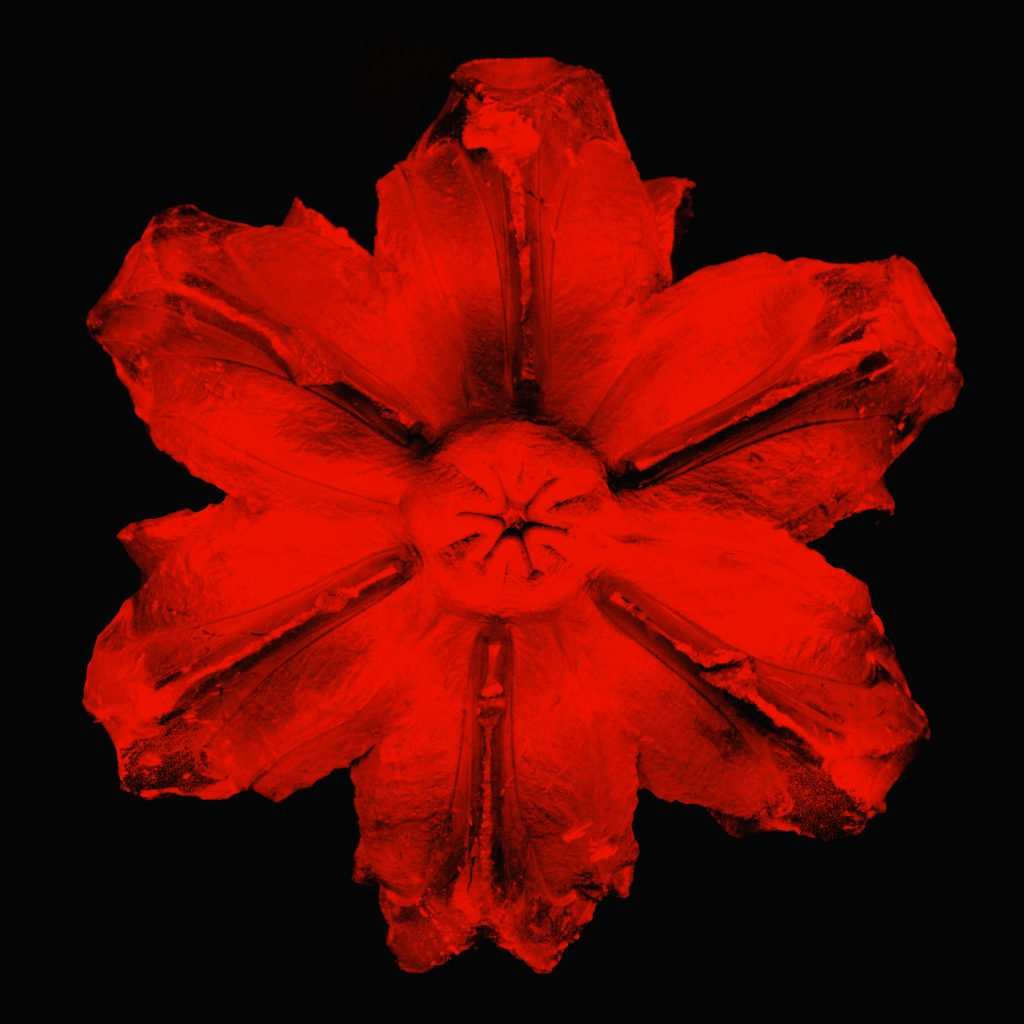 Rubem Robierb, Power Flower N-1 Red on Black