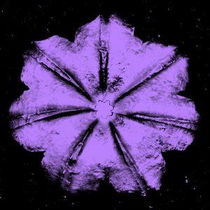 Rubem Robierb, Power Flower N-4, Violet Black